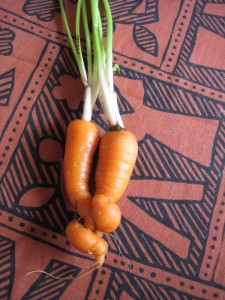 the friendly carrots